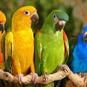 Most People Are Parrots