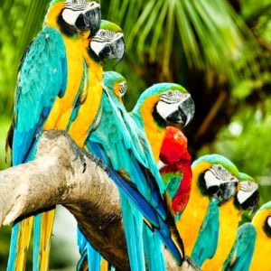 Are You A Culture Parrot?