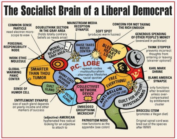 liberal-brain